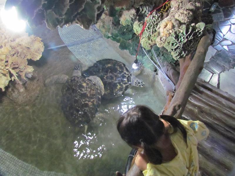 海龜習慣獨居,卻被關在大義宮內集體飼養。(翻攝畫面)