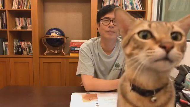 陳其邁愛貓陳小米在直播中不停搶鏡討摸,讓愛貓網友都融化了。(翻攝陳其邁臉書)