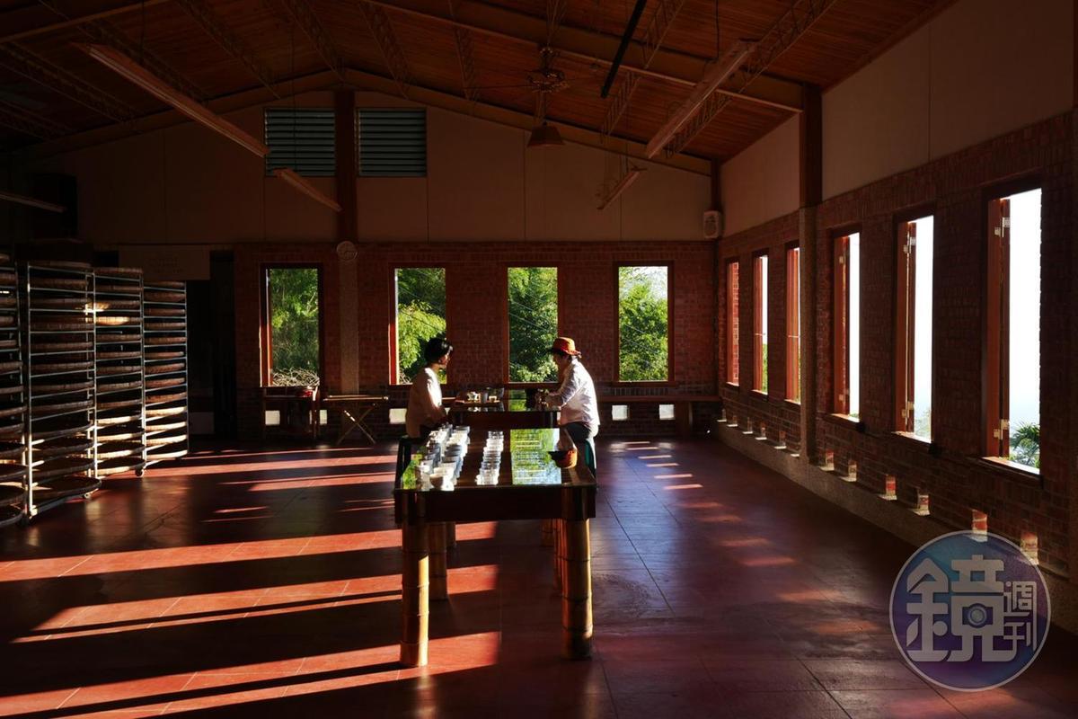 製茶廠早晨的光影變化像是陽光在跳舞。