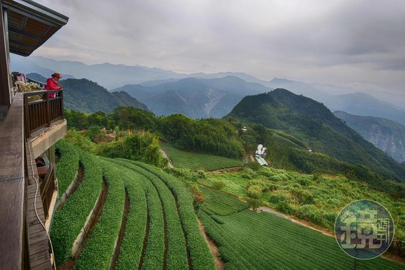 「生力農場」是阿里山上,擁有35年歷史的茶農。