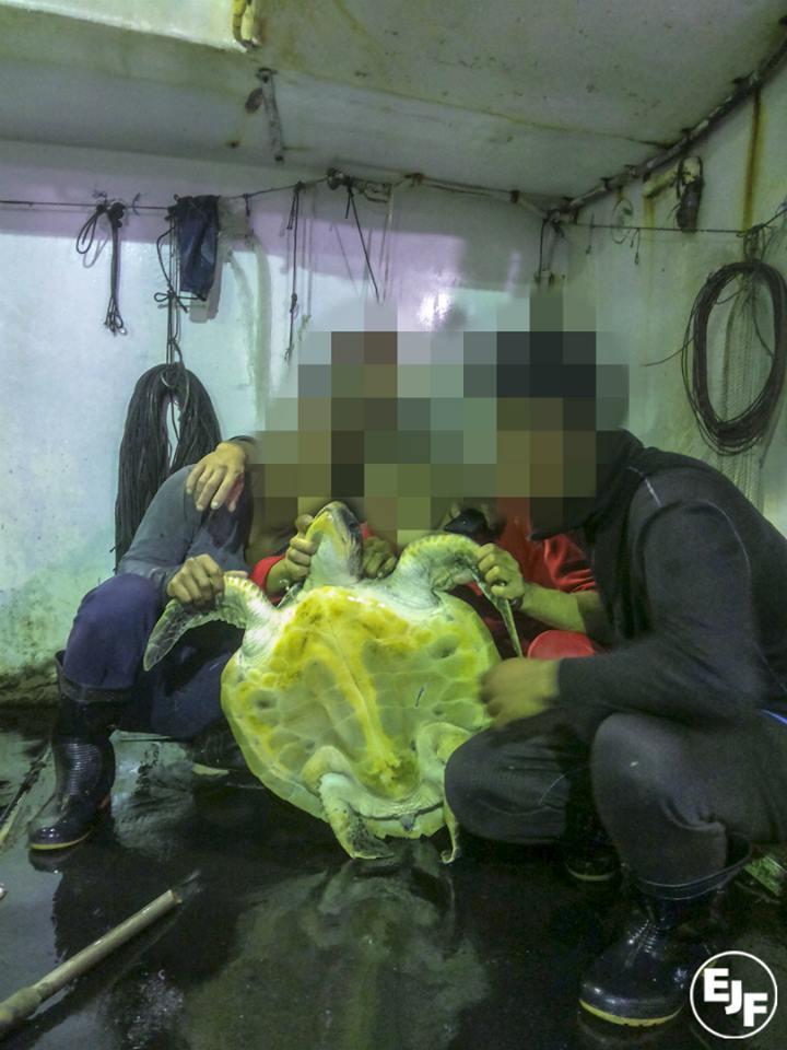 根據EJF所取得的照片可見,漁船所補的除了海豚外,還有海龜及幼鯊等海洋動物。(圖取自EJF)