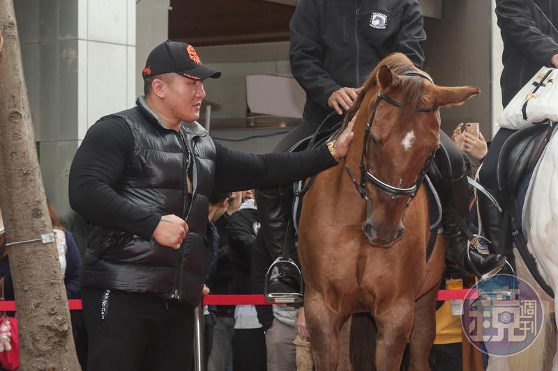 今天參加活動的馬匹都有點脾氣,就算是館長也得安撫一下。