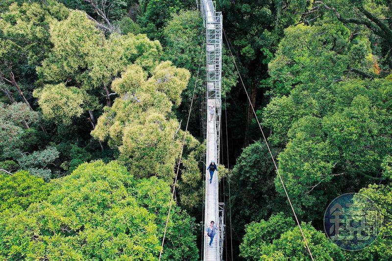 攀上50公尺高的「烏魯淡武廊國家公園」天空步道平台,就能站在樹冠之巔,體驗森林之王滋味。