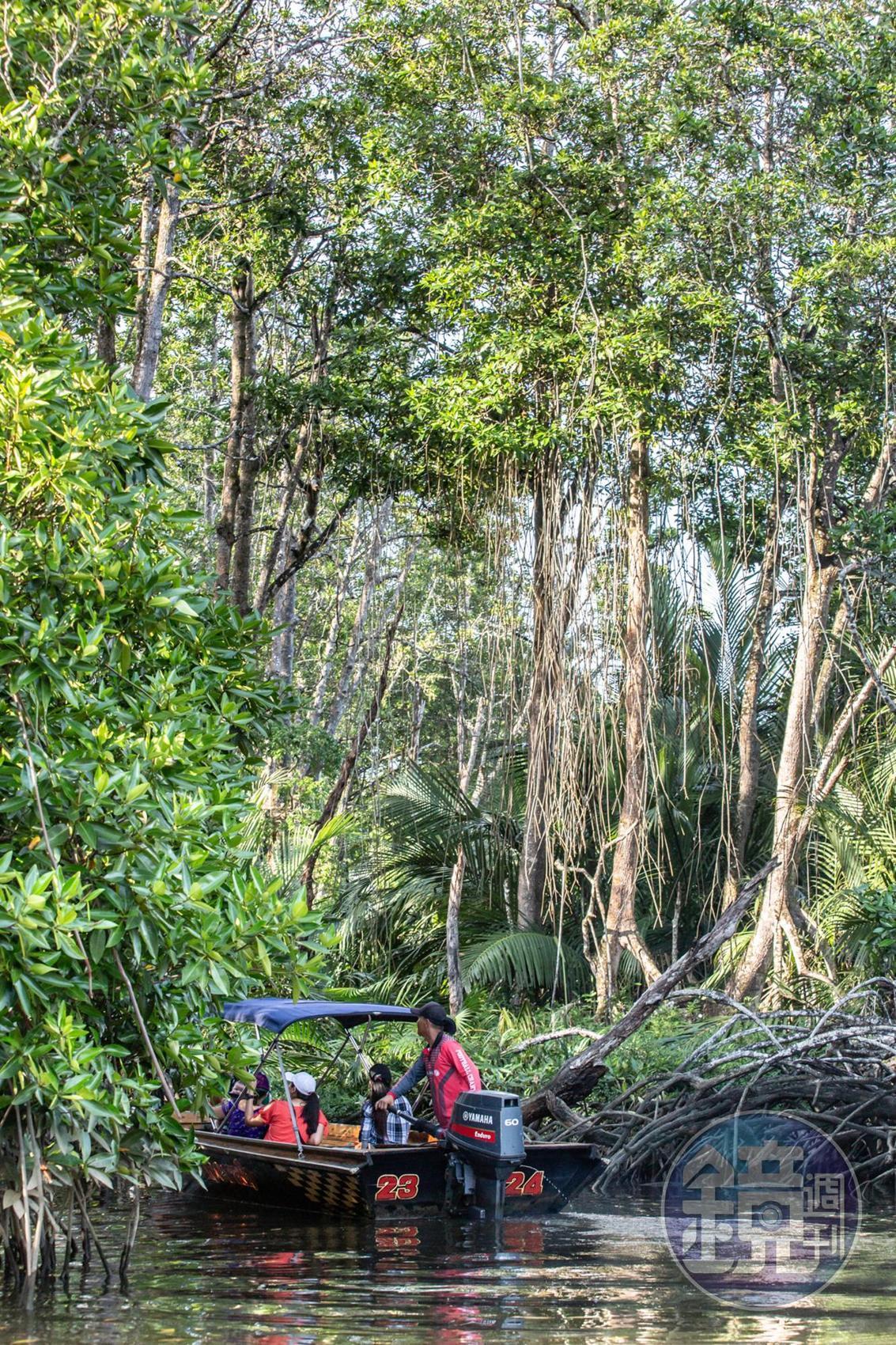 沿著汶萊河可以乘坐長舟尋找長鼻猴的蹤跡。