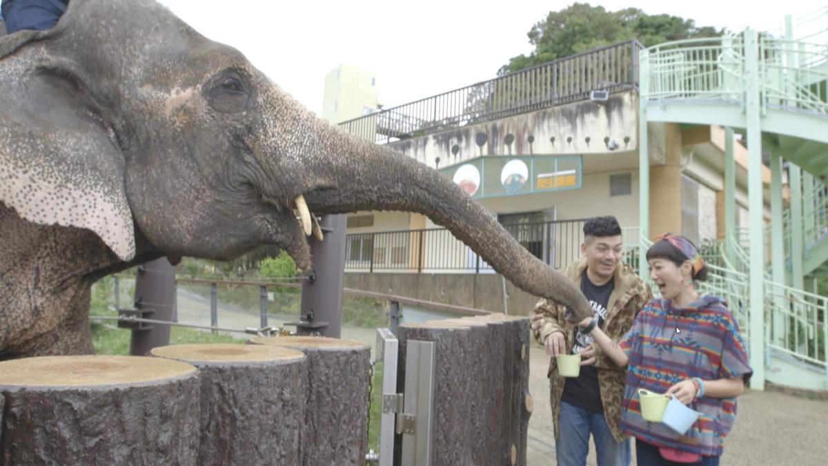 Gigi與史丹利和大象近距離接觸,十分興奮。(艾迪昇傳播提供)