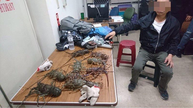 遭逮的鄧姓慣竊因剛偷完海鮮餐廳,身上還攜有9隻活龍蝦。(警方提供)