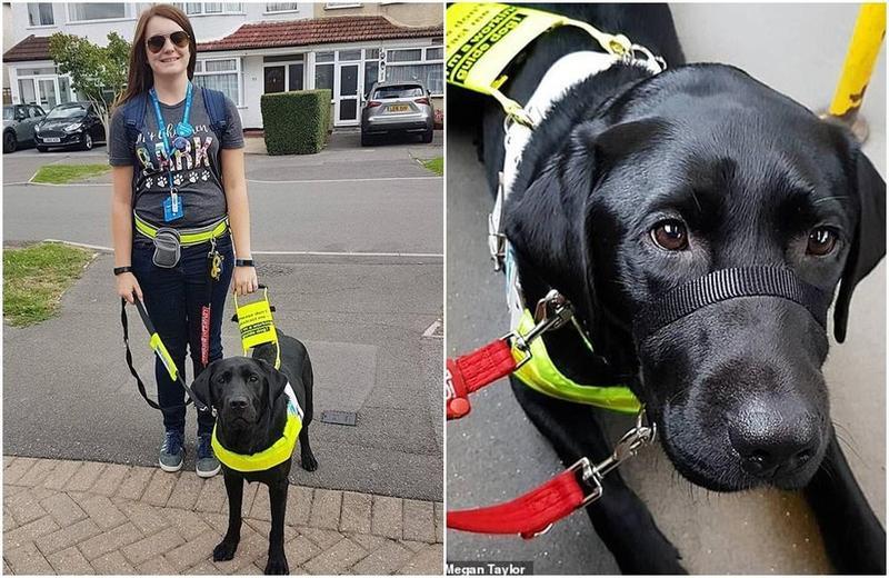 英國盲女被乘客趕下公車,只因為她的導盲犬是黑色的。(翻攝自DailyMail)