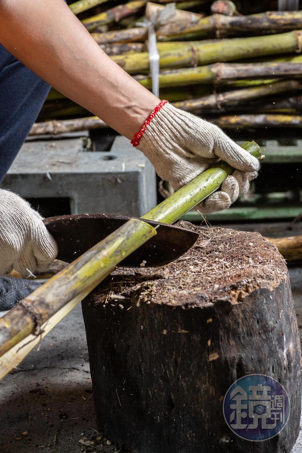 賴政宏說,白甘蔗纖維細長,容易剖開處理。