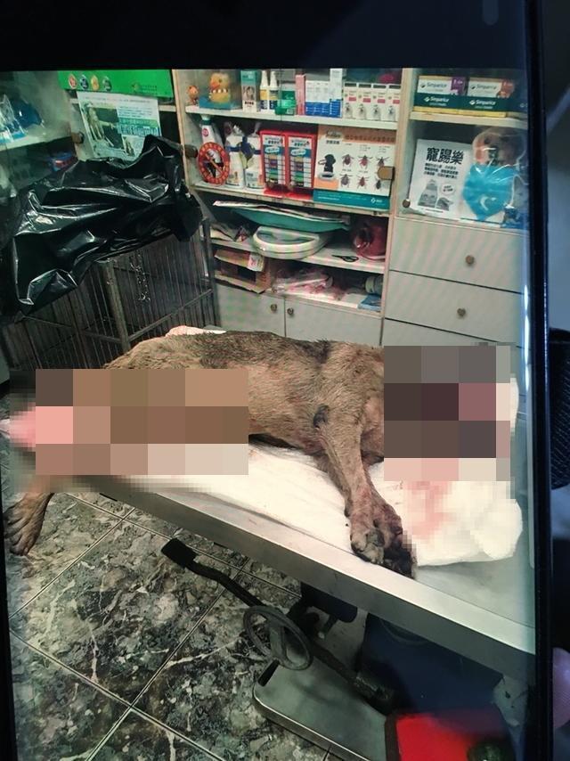 流浪狗慘遭比特犬攻擊,無辜喪命。(基隆動保所提供)