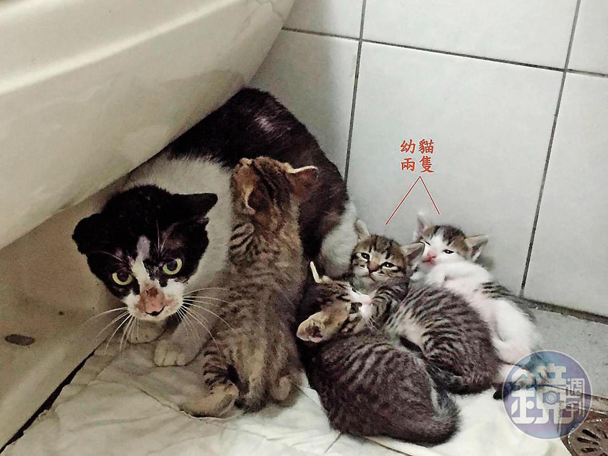 曾有愛媽將2隻幼貓送給朱女,小貓卻在短時間內「消失」。(讀者提供)