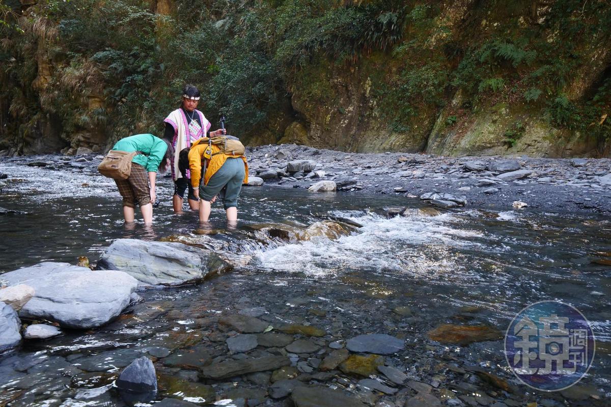 溪中尋找龍紋石。