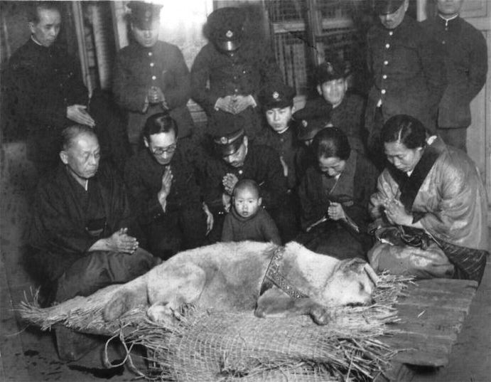 1935年3月忠犬八公過世當天,遺體被搬進澀谷車站,飼主上野教授的家屬隨侍在側雙手合十。(翻攝自維基百科)