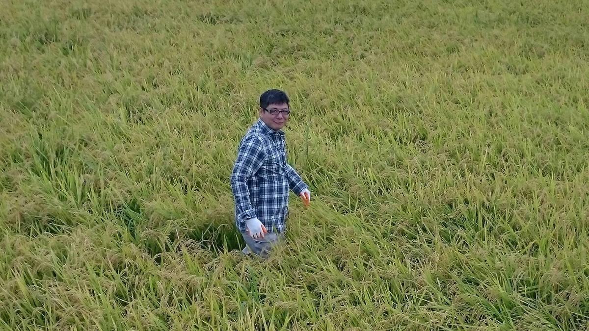 陳韋仁在日本島根縣種下台灣蓬萊米「台中六十五號」。(陳韋仁提供)