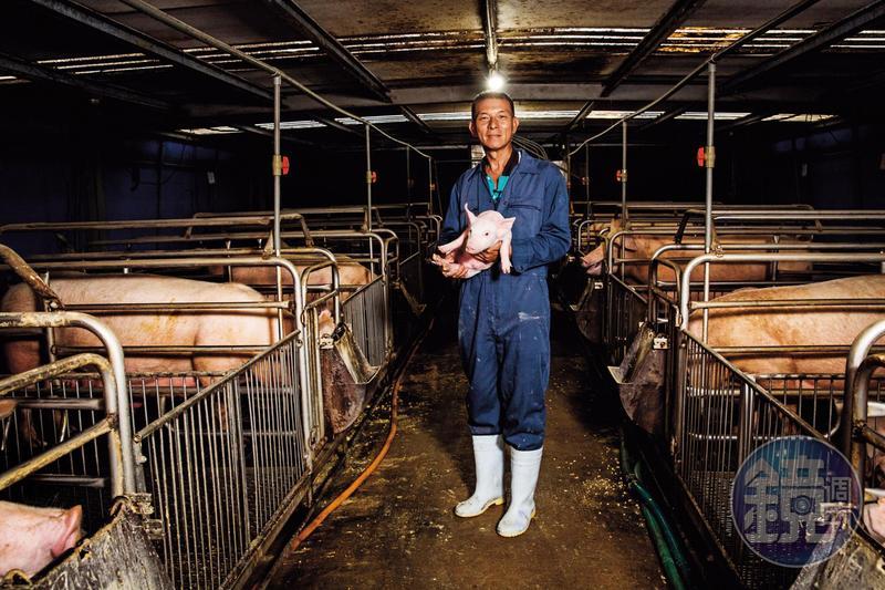 蘇鵬養豬40年,口蹄疫前多做外銷日本生意,口蹄疫後等於砍掉重練。他說台灣地小,防疫應該視全國為「一個場」,畢竟只要一個豬場淪陷,全國都視為疫區。