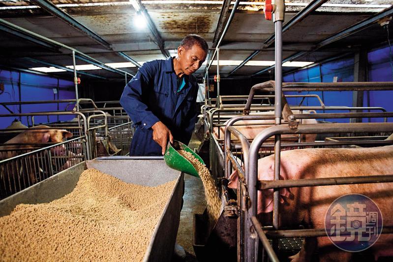 蘇鵬考慮再三才帶我們穿著防護衣進入豬場拍攝。非洲豬瘟兵臨城下,他說現在進出豬場都要消毒,每天固定消毒的頻率也增加。