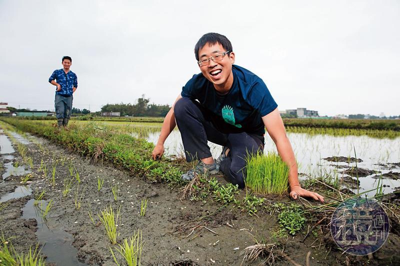 28歲的林哲安為了保護鳥類棲地成為青農,堅持用最天然的方式,零農藥、零化肥種稻。