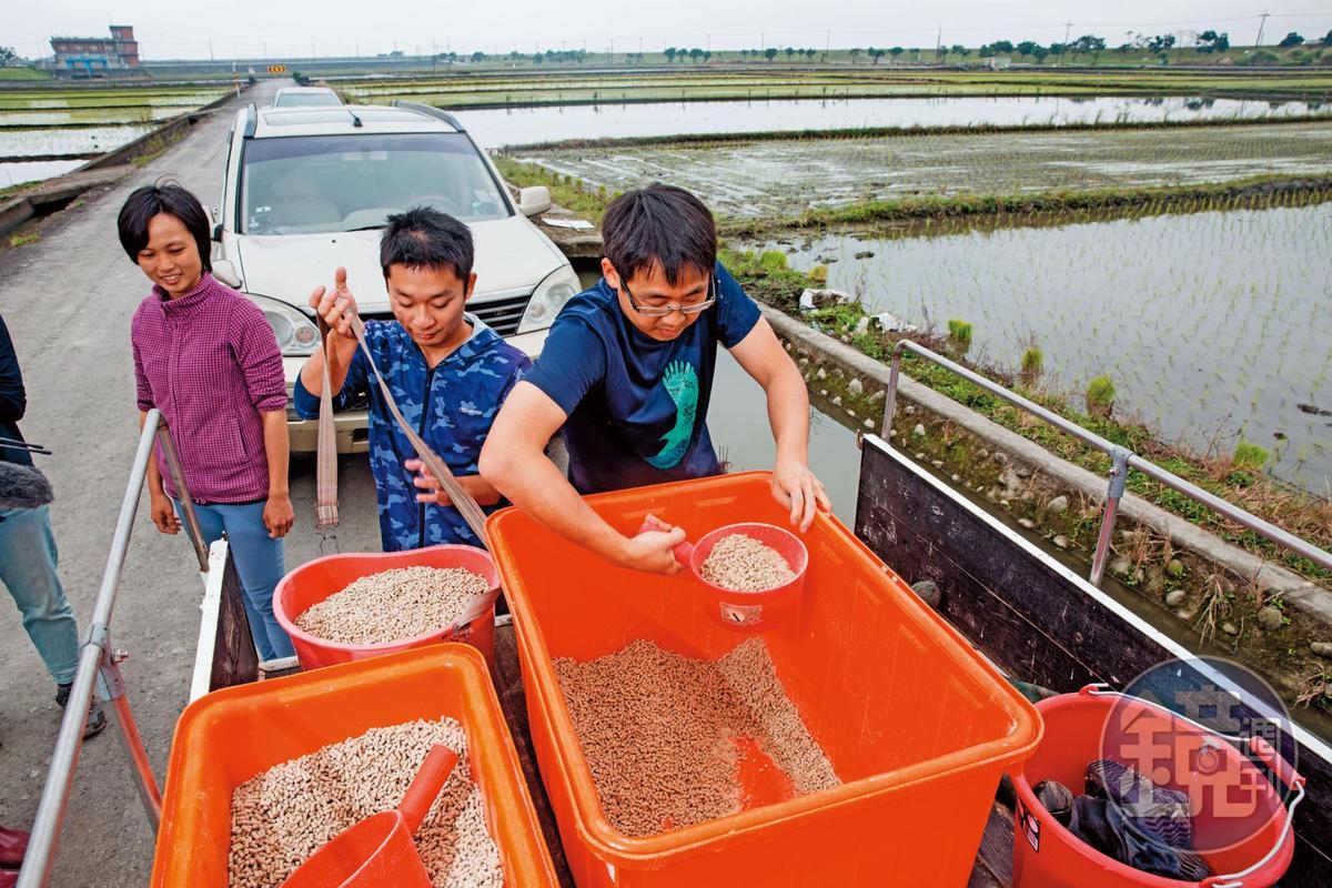 林哲安將米糠磨成粉、壓成粒,用來取代化肥,不僅種植效果好,還能抑制雜草生長,也能成為鳥類的食物。