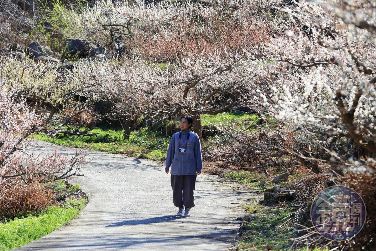 雖然雙蹊寺的櫻花在3月底還未盛開,但附近的梅林正好綻放。