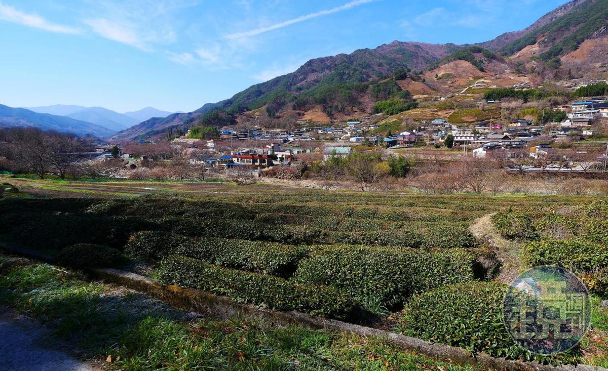 雙蹊寺周邊是韓國最古老的茶葉產地。
