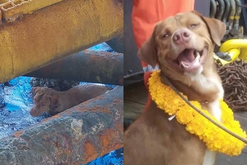 小狗漂流外海220公里幸運獲救,一張露齒燦笑的照片,融化了眾多網友。(翻攝自Vitisak Payalaw臉書)