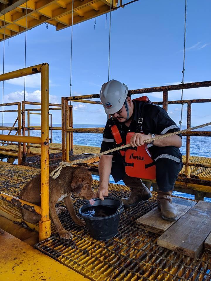 小狗在海中流失大量水分,維帝沙和其他工人們便餵牠喝水和肉塊。(翻攝自Vitisak Payalaw臉書)