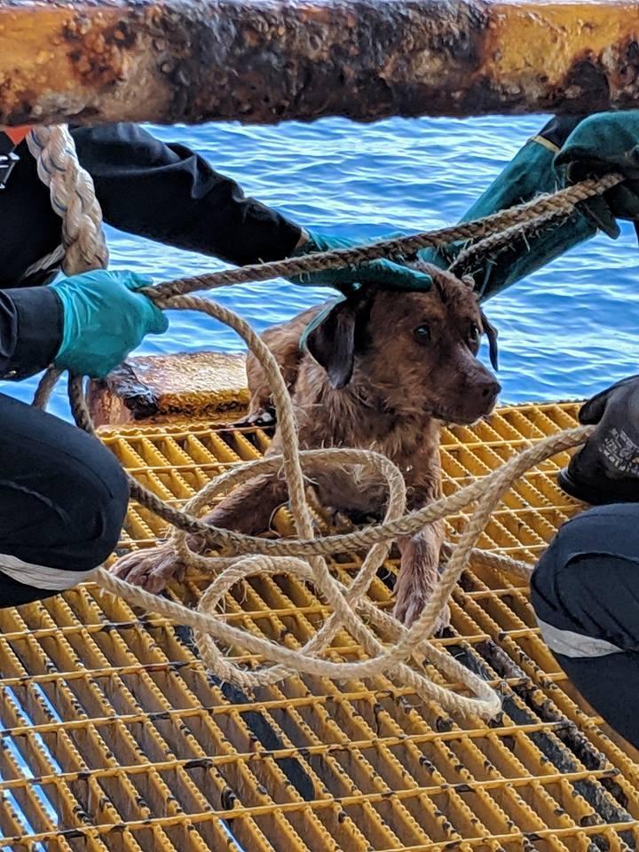泰國一名海上鑽油工人維帝沙日前在離岸220公里遠的海裡,救起一隻發抖的棕色小狗。(翻攝自Vitisak Payalaw臉書)