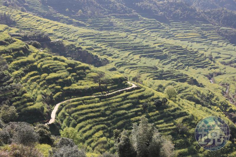 篁嶺四週有上萬畝的梯田,春天被油菜花占據,整片金光燦爛,被譽為全球十大最美梯田。