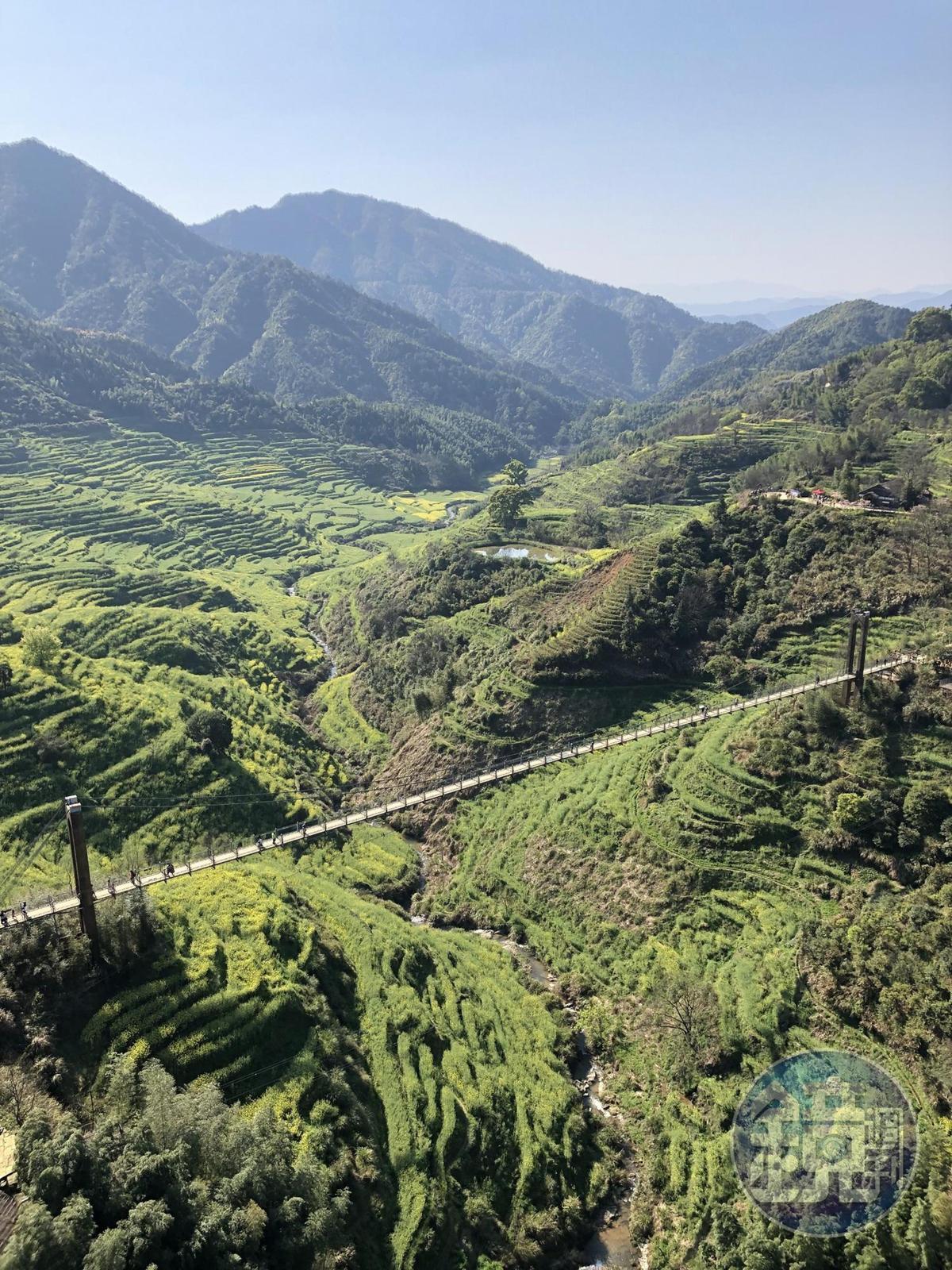 自壘心橋上往下看,數大就是美的油菜花田,填滿整個視野。