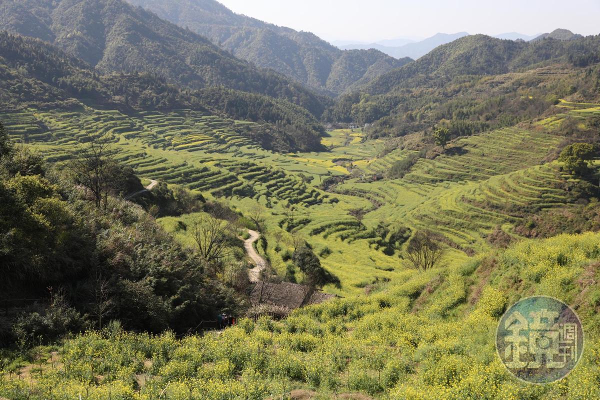 數大就是美,層層疊疊的梯田,形成春天限定的絕美景觀。