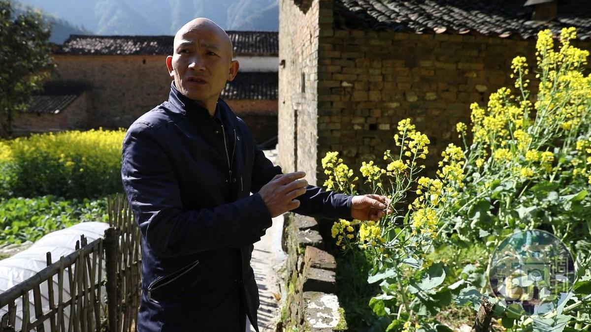 婺源的油菜花都有一個成人高,導遊單師傅說他們小時候都要幫著家裡種花、曬茶籽。