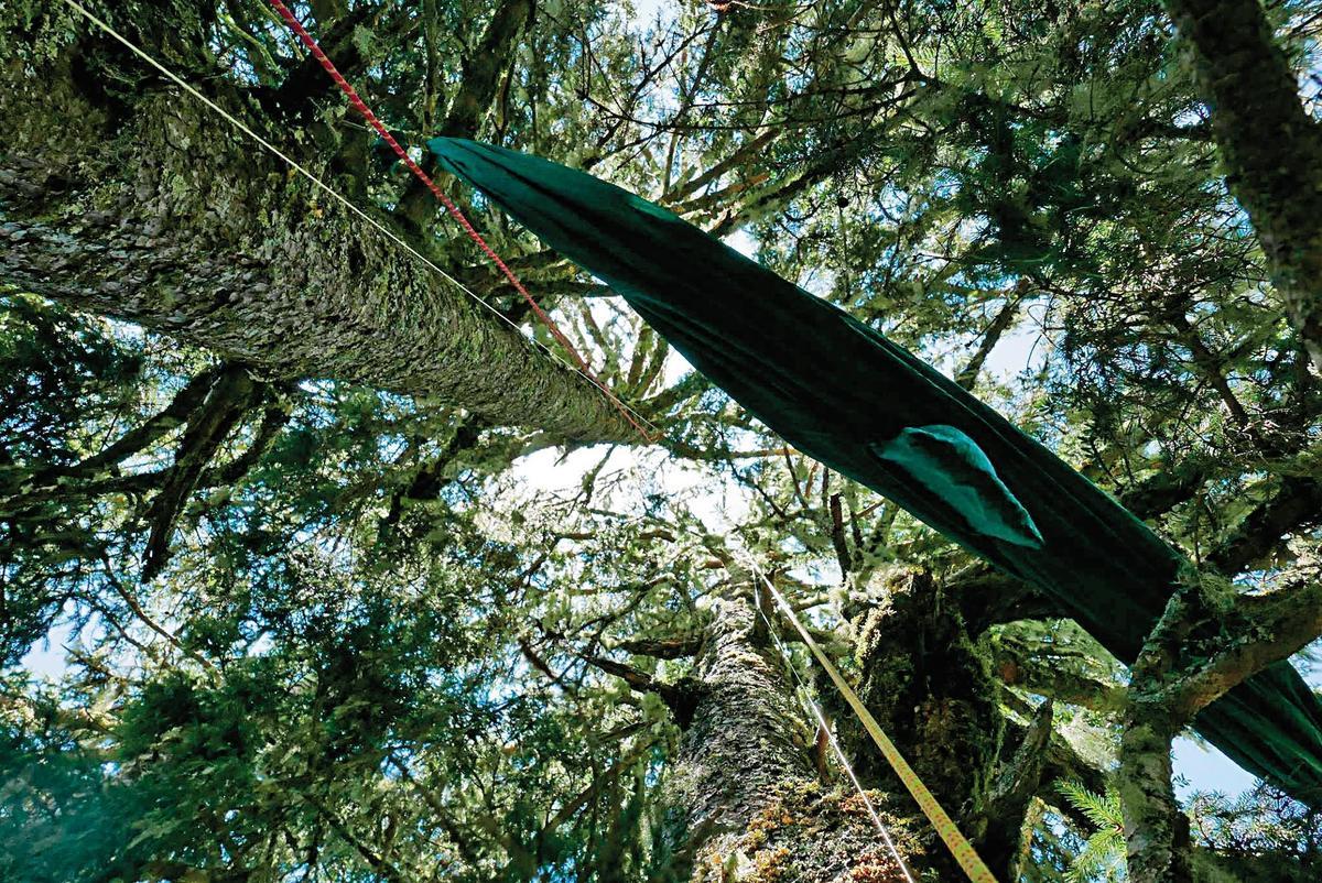 吊床架在樹上,平常就像一塊繃緊的布,人睡在上面才會張開。(陳雅得提供)