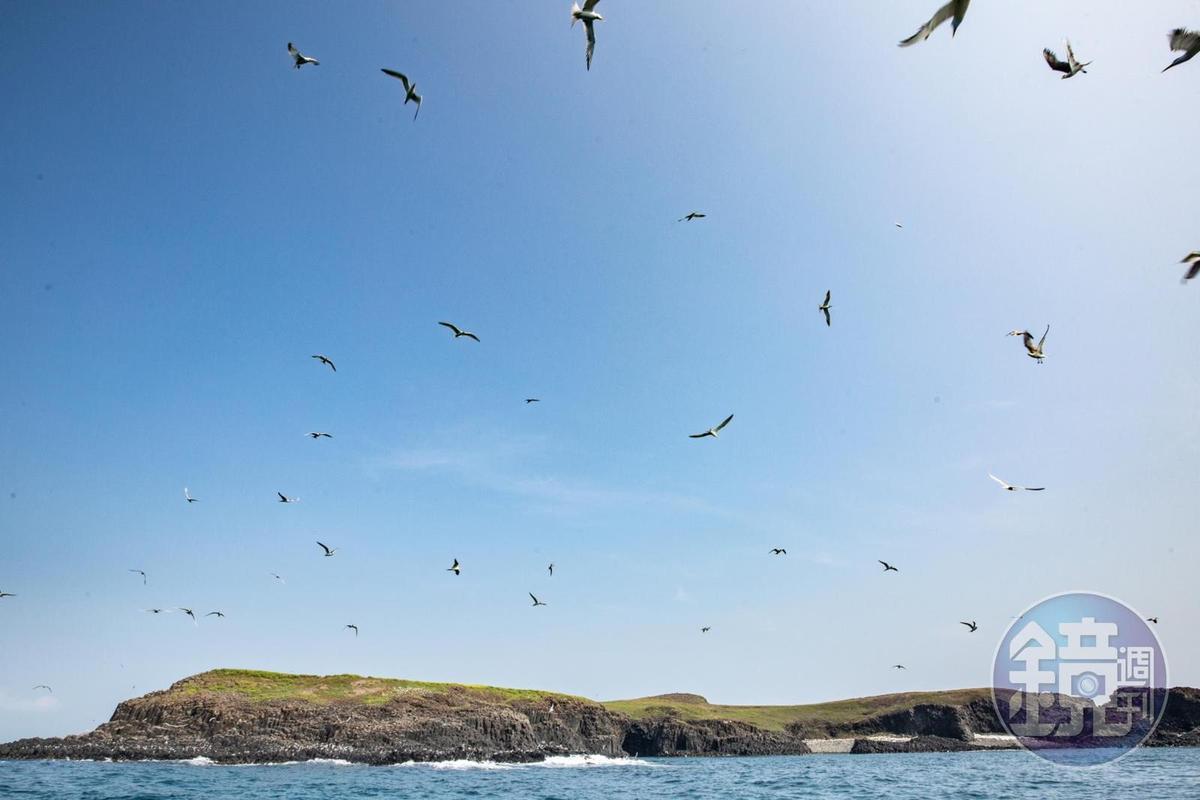 東海一日遊的行程中,會經過雞善嶼,這裡不僅有壯觀的玄武岩,也是燕鷗的天堂。