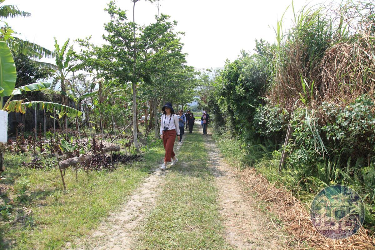 園內仍保留著阿嬤以前栽種的果樹。