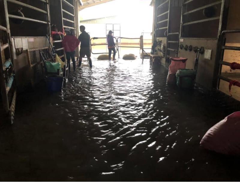 5月中連日豪雨,新屋馬場大淹水,馬術治療中心希望能另覓更適合的場地,讓治療能順利進行下去。(台灣馬術治療中心提供)