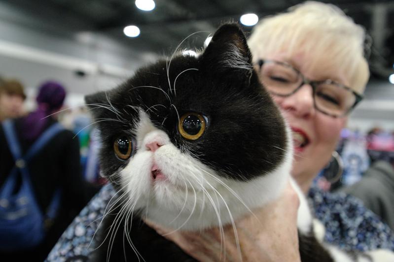 美國有多達1/4的貓咪被執行去爪手術。(東方IC)