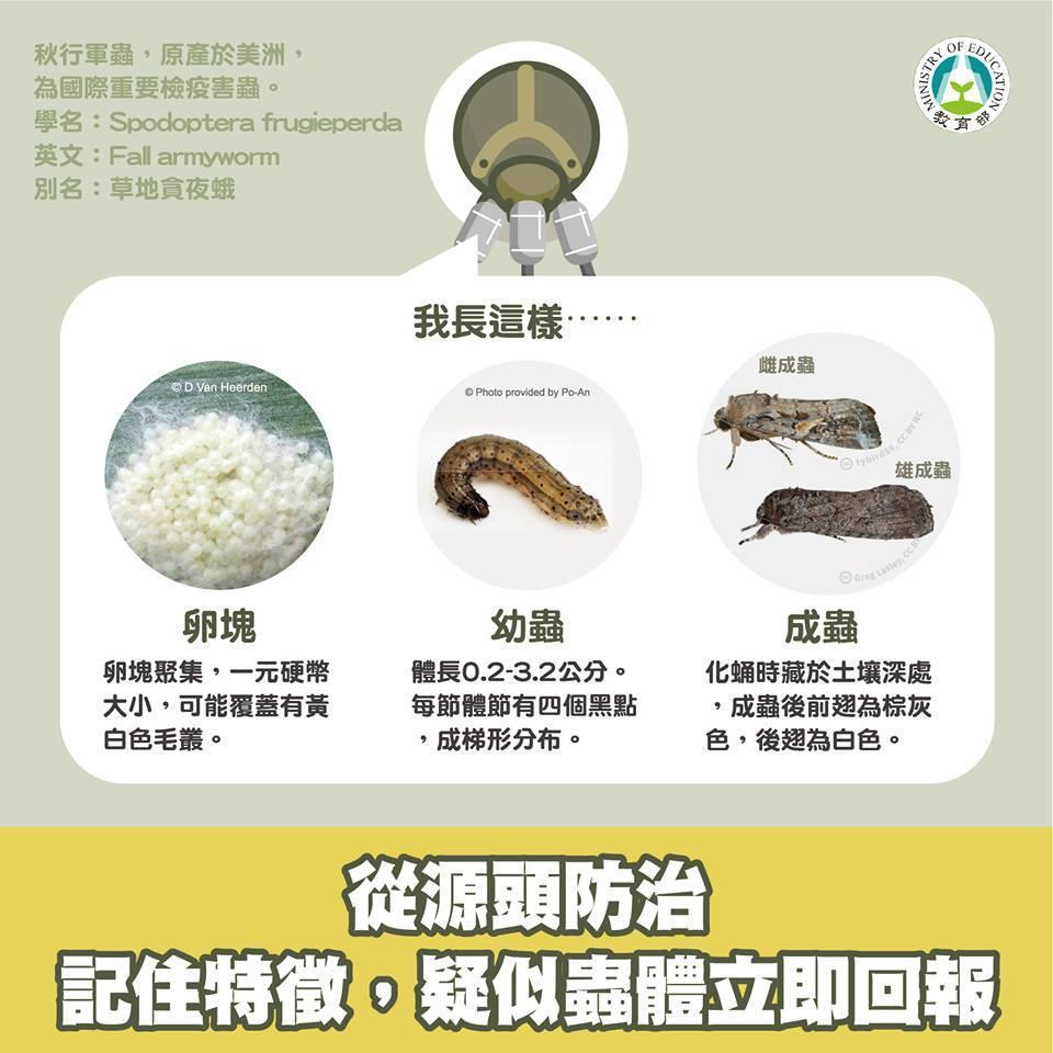 教育部宣傳「校安通報系統」,力抗秋行軍蟲疫情擴大。(翻攝自教育部臉書)