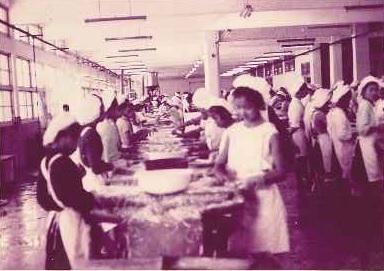 東和食品早期是生產蘆筍、洋菇罐頭起家,早年現場作業員多是年輕女工。(東和食品提供)
