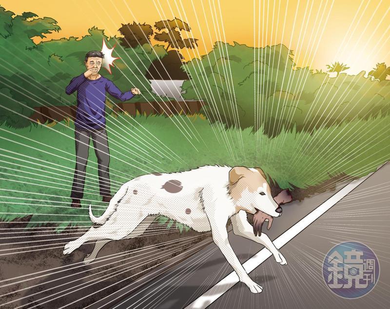 小狗「胖胖」叼出人骨,意外揭發一起分屍案。