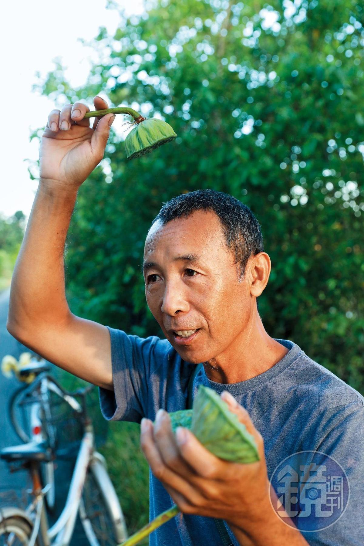 鄭秋郎說蓮蓬頭取名的靈感就是來自蓮蓬。