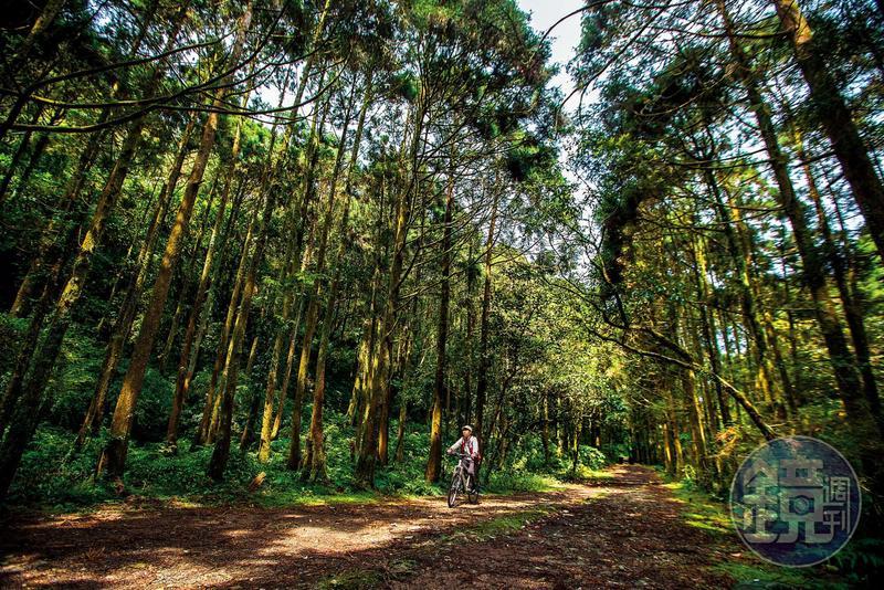 伐木後的人工造林,與坡度平緩的路徑,是「坪溪古道」最誘人的特色。