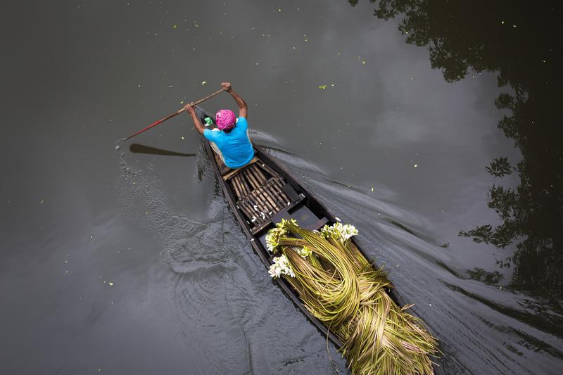 孟加拉農民駕船運送蓮花到達卡的市集。孟加拉全國鄉村地區超過半數,是面臨全球氣候變遷威脅最大的國家之一。(東方IC)