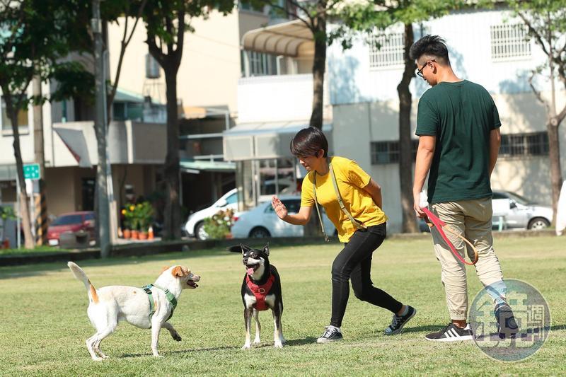 過去,劉憲宗(右)雖然沒有長期養狗的經驗,卻因為太太譚柔(左)對流浪動物的狂熱婦唱夫隨。圖為二人帶自家飼養的米克斯,到浪浪別哭台中店附近的公園散步。