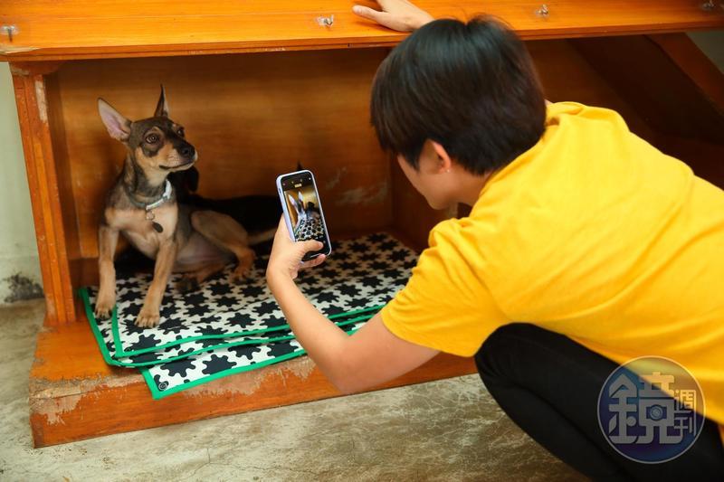 新北動保處最近寄發「犬貓寵物絕育通知暨狂犬病注射通知書」,提醒民眾做好飼主責任。