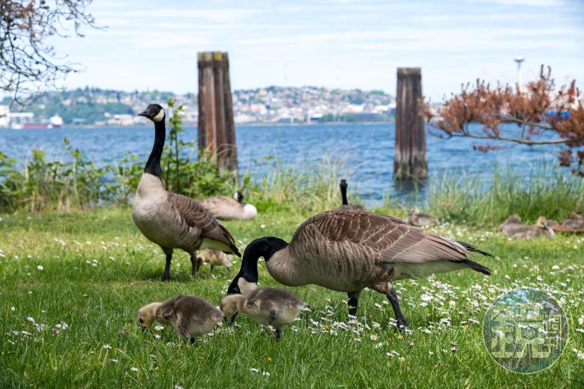 餐廳旁還有海鳥漫步,生態豐富。