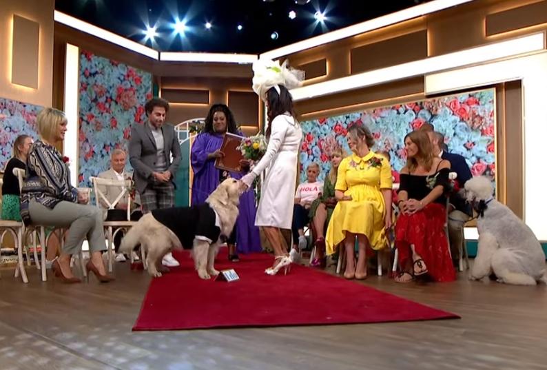 霍德和愛犬盧根的婚禮,透過電視節目直播。(翻攝自This Morning youtube)