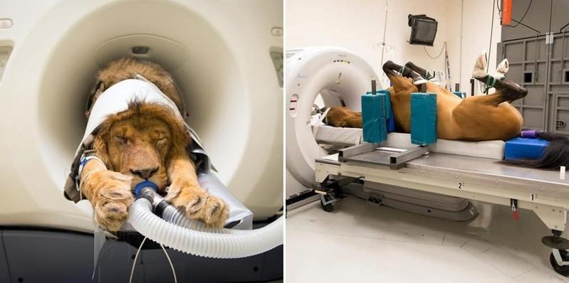 超可愛動物CT照。(翻攝自Medicine Meets Technology,以下皆同)