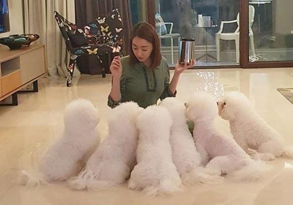 徐孝琳經常在社群媒體上分享與6隻愛犬的生活點滴。(中天提供)