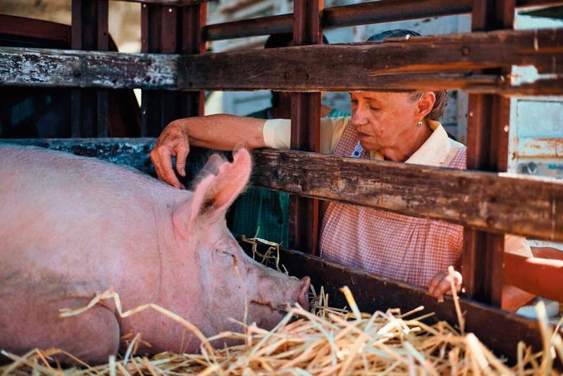刻劃孤獨多過輕鬆奇想,阿嬤藉著養豬找回生活重心,與鄰居互相扶持,平淡中見感動。(聯影提供)