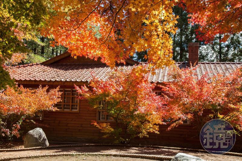 秋高氣爽楓葉也陸續轉紅,不妨來趟賞楓之旅。(圖為福壽山農場松廬)