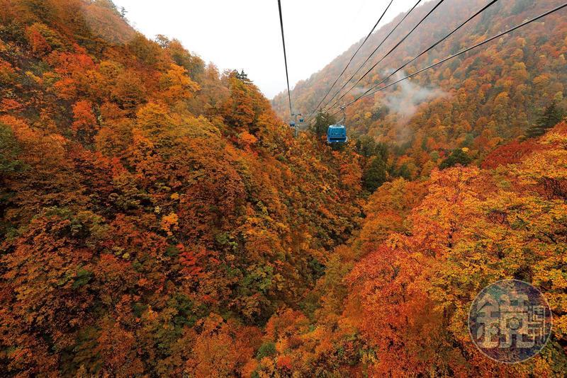 日本最長的苗場纜車,穿梭在紅橘黃漸層色彩包裹的深山中,可拜見季節限定的紅葉美景。